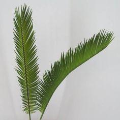 Large Artificial Cycas Palm Leaf (Areca Palm) - PM002 / £1.06 / out of stock / L55cm - Leaf dimension L38cm W14cm