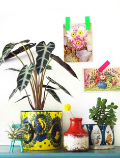 Urban Jungle Bloggers: One Plant - Three Stylings by @hipaholic