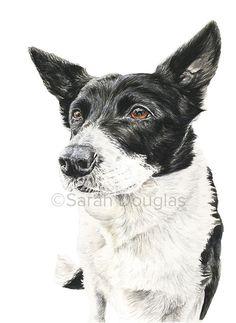 Pet portrait of border collie dog in watercolour by Sarah Douglas