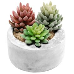 This cement succulent planter ($16) that is solid as hell. | Can You Get Through This Post Without Spending $50