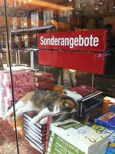 Every bookstore needs a cat!