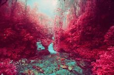 Loving this series of landscape photographs, captured on infrared film.