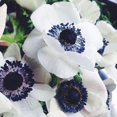 Anemones via Flower Magazine