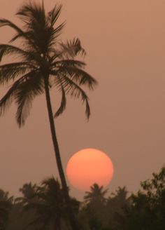 A typical picture of summer time. A palm tree with a sun setting behind.