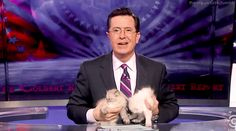Every moment he speaks, thinks, lives, and breathes. | 22 Times Stephen Colbert Was The Perfect Man