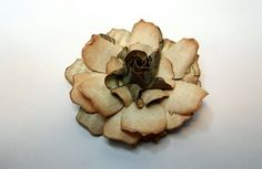 Moments of Tranquility... by Natasha Naranjo Aguirre: Gardenia Flower Tutorial