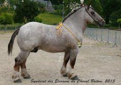 Whoa DAT ONE BIG HORSEY