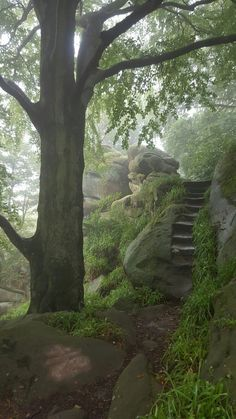 Druids Caves, Birchover:, Derbyshire, England (Step Stairs Wood)