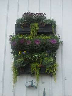 vertical wall made out of a pallet planted with mums kale winter pansies lysamachia Tire Planters, Fall Planters, Winter Pansies, Pallets Garden, Autumn Garden, Funny Art, Garden Projects, Garden Pots, Kale