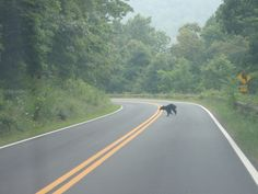 On no.... Bear in Front !