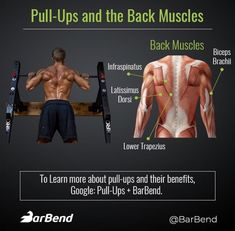 Lean Muscle Workout Plan, Weight Training, Weight Lifting, Latissimus Dorsi, Compound Exercises, Gym Tips, Back Exercises, Back Muscles, Gym Humor