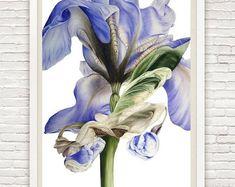 Art Print, Iris, Gift For Her, Fine Art Botanical Print, Iris Painting, Botanical Illustration, Home Decor Wall Art