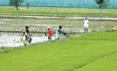 #Chandrababu won't meet rebel farmers http://goo.gl/Qb3imN