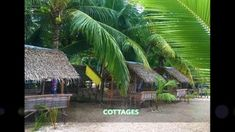 Tourist Spots, Cebu, Beach Resorts, Weekend Getaways, Where To Go, Philippines, Beaches, Traveling By Yourself, Plant Leaves