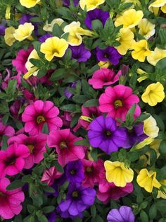 Perfect flower combinations! #flowers #smithscountrygardens Beautiful Flowers, Beautiful Pictures, Flowers Perennials, Country, Gardens, Plants, Nature, Perfect Love, Fields