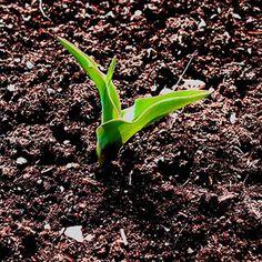 Aportar materia orgánica a las tierras de cultivo mejora: las características físicas y de porosidad de los suelos, la retención de agua, o la permeabilidad y estimula la flora microbiana que es la que facilita la transformación de los compuestos de la tierra en nutrientes para el cultivo.