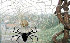 A Teia de Aranha