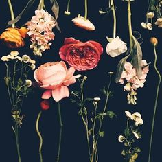 justina blakeney's flower studies