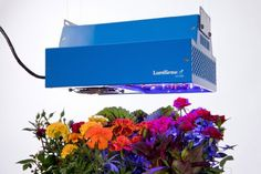 LumiGrow LED Grow Light *** Continue to the product at the image link. (This is an affiliate link) Small Greenhouses For Sale, Greenhouse Kits For Sale, Cheap Greenhouse, Portable Greenhouse, Indoor Grow Lights, Best Led Grow Lights, Indoor Gardening, Indoor Plants, Indoor Flower Pots