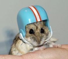 Hamster helmet