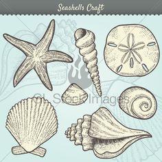 Vector Illustration Of Various Sea Shells Doodl...