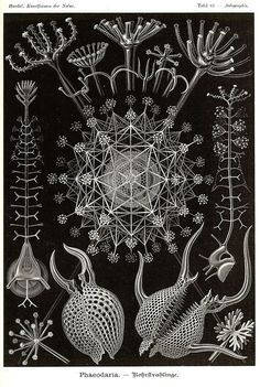 Kunst-Formen der Natur, by Ernst Haeckel, 1898. This is a wonderful book, in the public domain, which features all sorts of illustrations of the natural world. If you're doing some research for organic shapes, this book is a nice place to start.