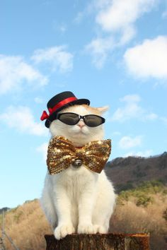 I think more cats should wear shades, however, no cat has ever asked my opinion on this matter.