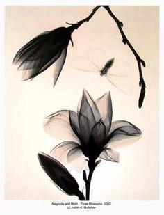 16x20-Magnolia-and-Moth-3-Blossoms-2002-reduced_web.jpg 305×400 pixels