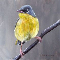Grey Crowned Yellowthroat - 5 x 5 inches