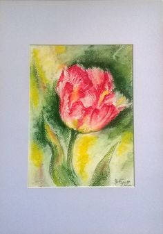 Tulip/pastel