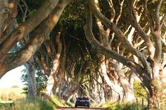 The Dark Hedge - Stranocum, County Antrim  (From Buzzfeed 26 Places article) http://www.discovernorthernireland.com/The-Dark-Hedges-Armoy-Ballymoney-P27502