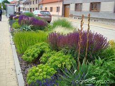 Umiejętne zestawianie roślin, zgrane duety - wyłącznie przykłady kompozycji - strona 14 - Forum ogrodnicze - Ogrodowisko