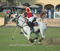 Haptoor Polo.....equuspixphotography