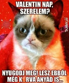 New funny memes humor hilarious sarcasm grumpy cat 30 ideas New Funny Memes, Best Funny Jokes, Super Funny Memes, Funny Memes About Girls, Funny Animal Memes, Funny Animals, Funny Sayings, Funny Babies, Funny Kids