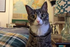 Scientists Have Composed Music For Your Cats | Mental Floss