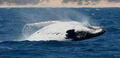 Book in St Lucia Book in Richards Bay Boat Based Whale & Dolphin Watching in St Lucia, South Africa Provinces Of South Africa, Wetland Park, Bay Boats, Kwazulu Natal, Whale Watching, Small Towns, Safari, Coast, Elephant