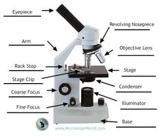 Microscope diagram tom butler technical drawing and illustration labeling the parts of the microscope blank diagram available for download http ccuart Image collections