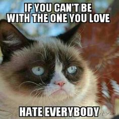 grumpy cat pictures with captions   Grumpy Cat hates everyone Meme -