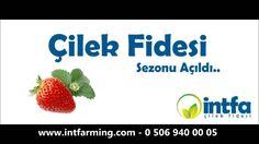 Çilek Fidesinde Kampanya! 1000 Adet 249.00 TL http://www.intfarming.com/cilek-fidesi