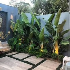 STYLE TIP - Tree Potting — Adam Robinson Design Tropical vibes 🌴🌱 . Install Let's Go Tree Potting Add a beautiful feature to your garden… Tropical Garden Design, Modern Garden Design, Backyard Garden Design, Tropical Landscaping, Front Yard Landscaping, Palm Trees Landscaping, Tropical Decor, Tropical Plants, Pool Plants