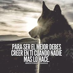 Motivational Phrases, Inspirational Quotes, Wolf Life, Millionaire Quotes, Spanish Quotes, Cool Words, Mindfulness, Wisdom, Positivity