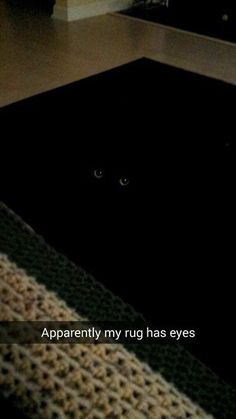 30 Hilarious Cat Memes #Cat Memes #Funny Pictures http://ibeebz.com