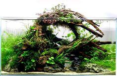 #AquariumTanksIdeas #TropicalFishAquariumIdeas