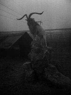 Gothic, Horror, and More \m/ Baphomet watches over your village. Arte Horror, Horror Art, Gothic Horror, Black Phillip, Satanic Art, The Ancient Magus, Images Gif, Creepy Images, Arte Obscura
