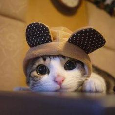 Ears...ok I get it... Now take 'em off!
