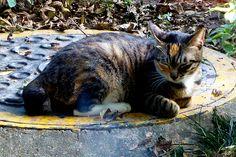 The Luo Hu stray cats Shenzhen China