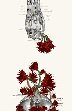 Travis Bedel - anatomy + botany