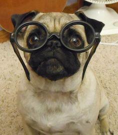 c769f9a0d279 76 Best Eye Glasses images
