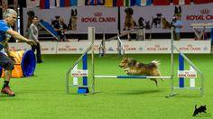 https://flic.kr/p/CJU6u4 | Dmitri Kargin mit Stenley | AWC 2015 - Team Jumping Small