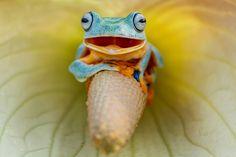 カエル好きオンリー。世にもかわいいカエルたちの写真20